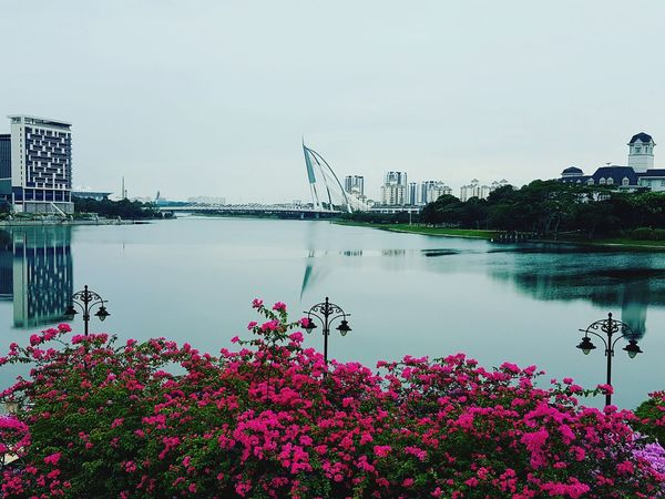 evening after rain Flower Water Outdoors Day Tranquil Scene Beauty In Nature No People Nature Tranquility Growth Sky Scenics City