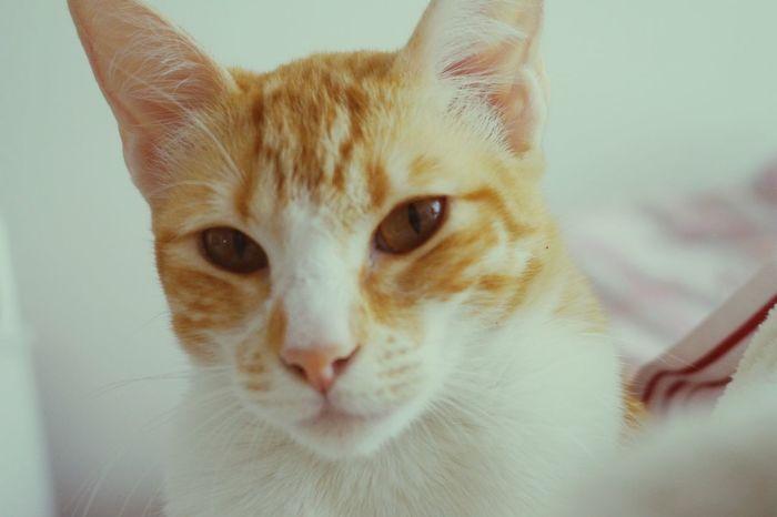 Sundaymood Domestic Cat Feline Day EyeEm Yellowcat Instamoments