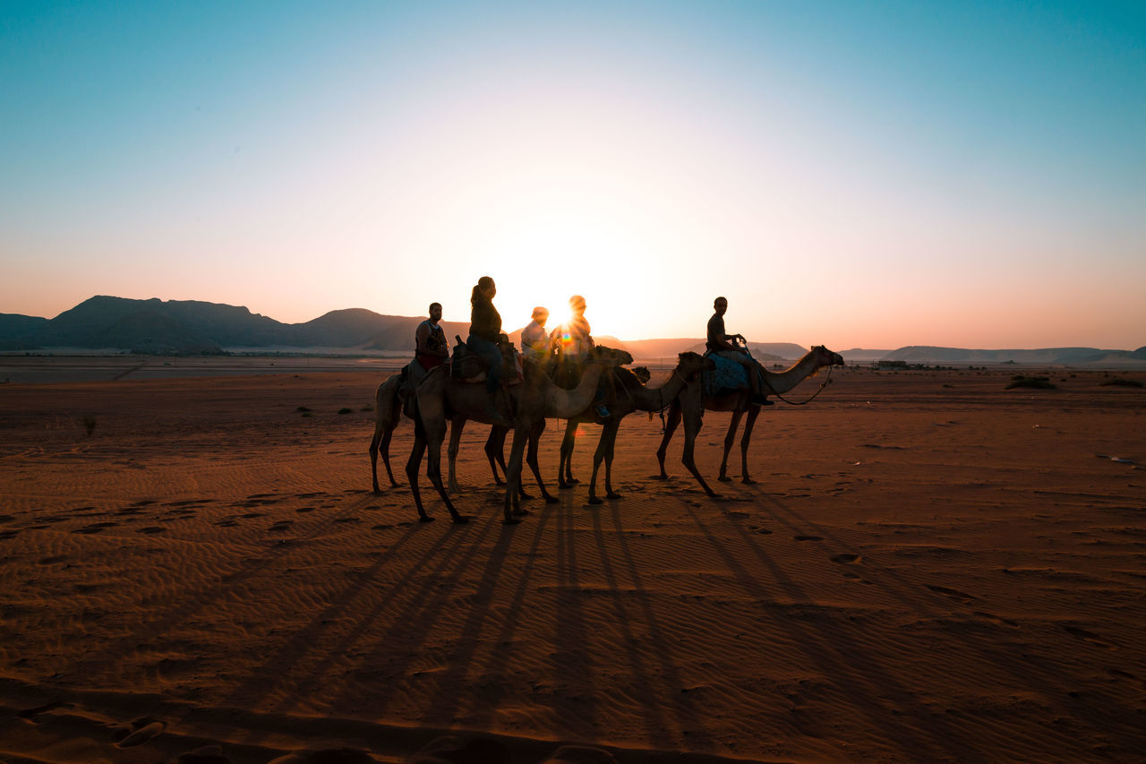 Beautiful stock photos of camel, Animal Themes, Arid Climate, Back Lit, Beauty In Nature