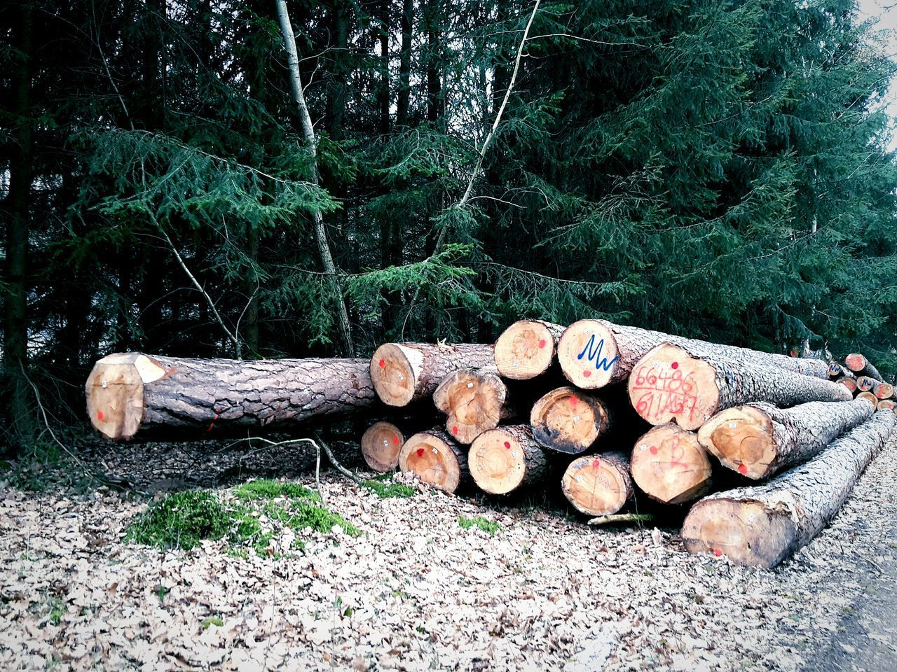 Poor Tree Deadtrees Death Death Forest Murdered The Forest Needs Us Help Trees Nature Forest Photography Forestwalk Forest View Forest Walk Forestry Industry Sad Trees Sad Truth Death Dead Forest Dead Tree Dead Nature Dead Trees Deadwood  Wood Industry