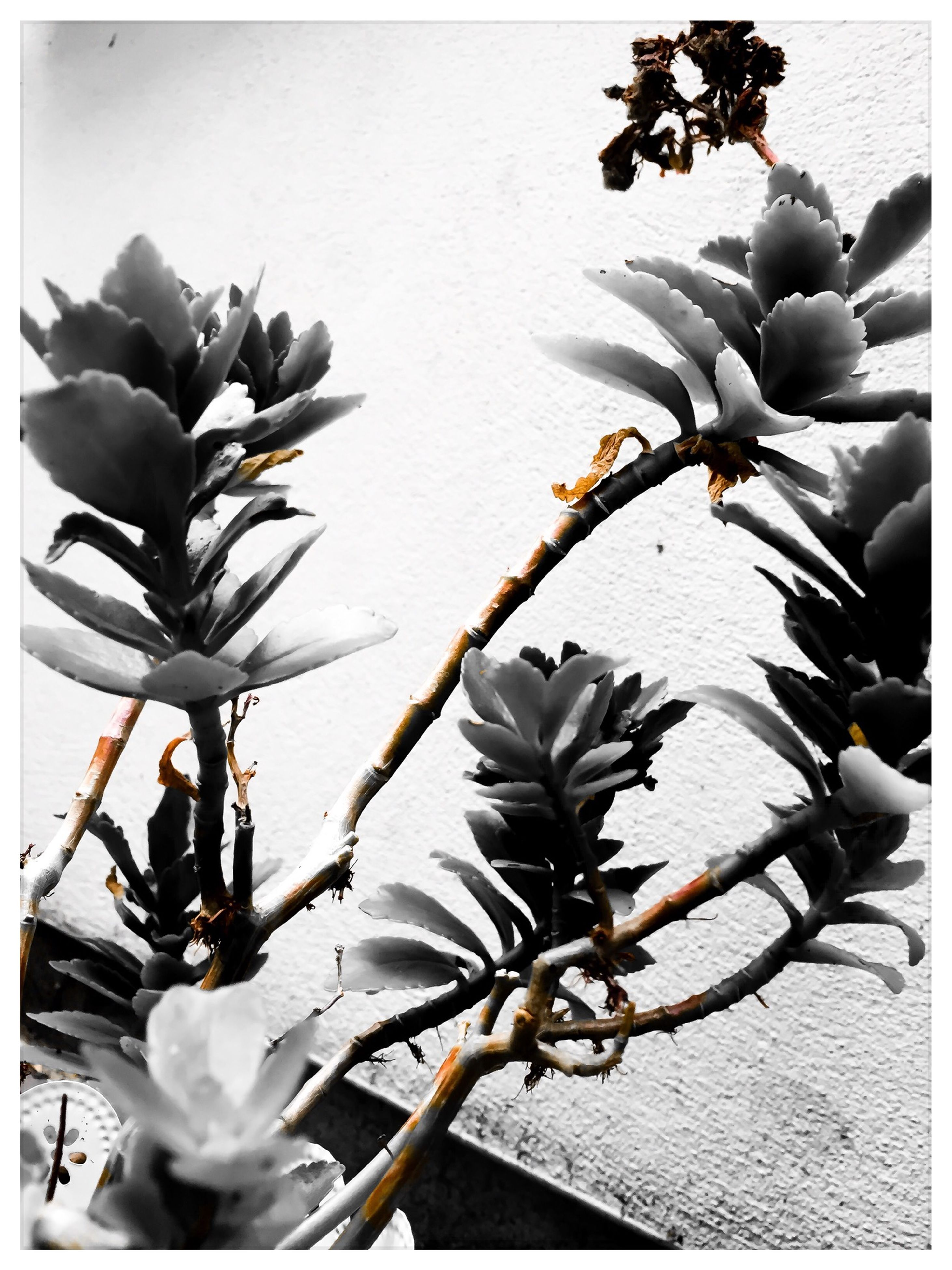 flower, transfer print, auto post production filter, plant, fragility, growth, nature, freshness, petal, wall - building feature, day, beauty in nature, high angle view, stem, outdoors, flower head, close-up, leaf, potted plant, sunlight