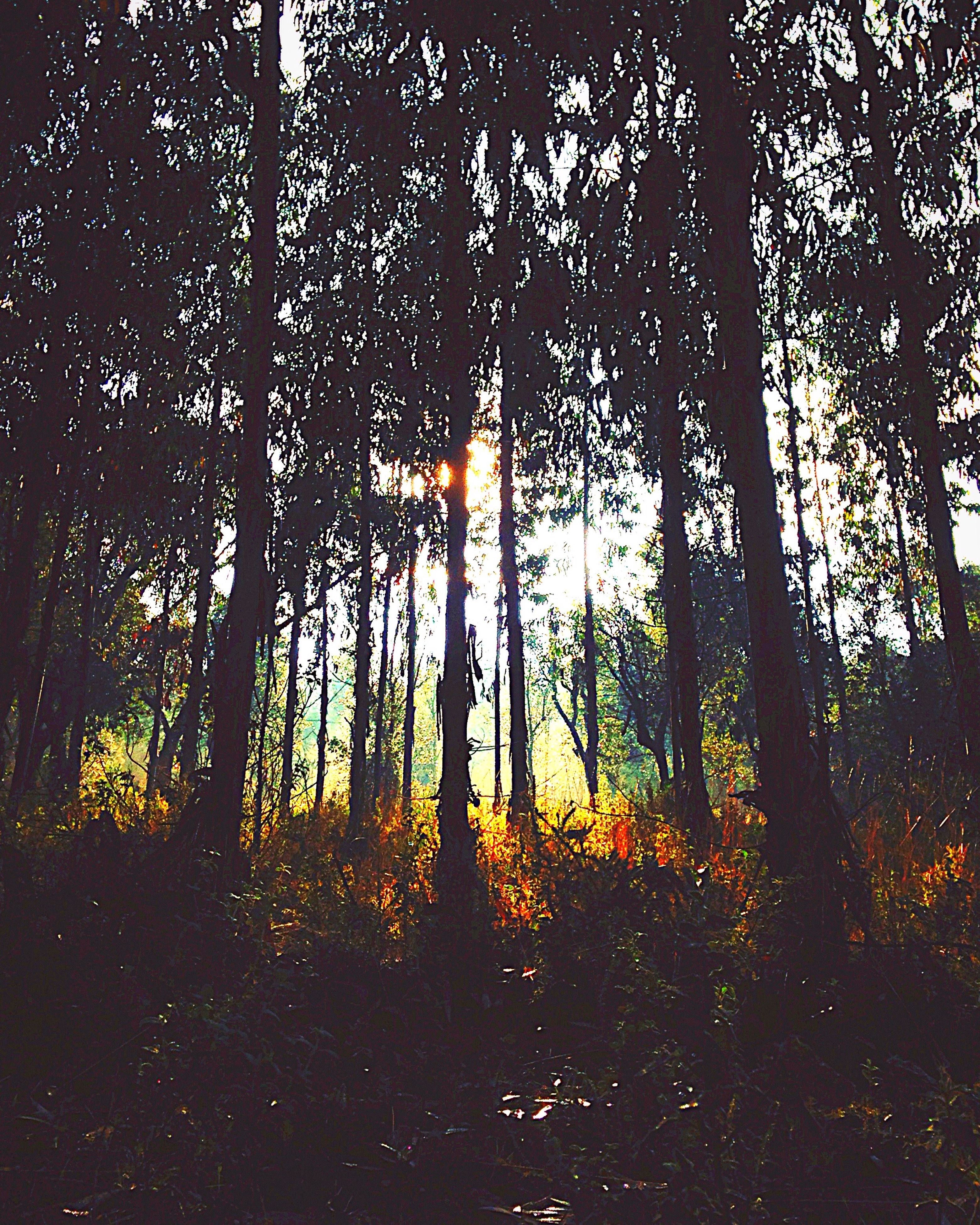 tree, growth, silhouette, tree trunk, tranquility, nature, sunlight, dark, low angle view, branch, night, no people, beauty in nature, outdoors, forest, shadow, plant, sunset, tranquil scene
