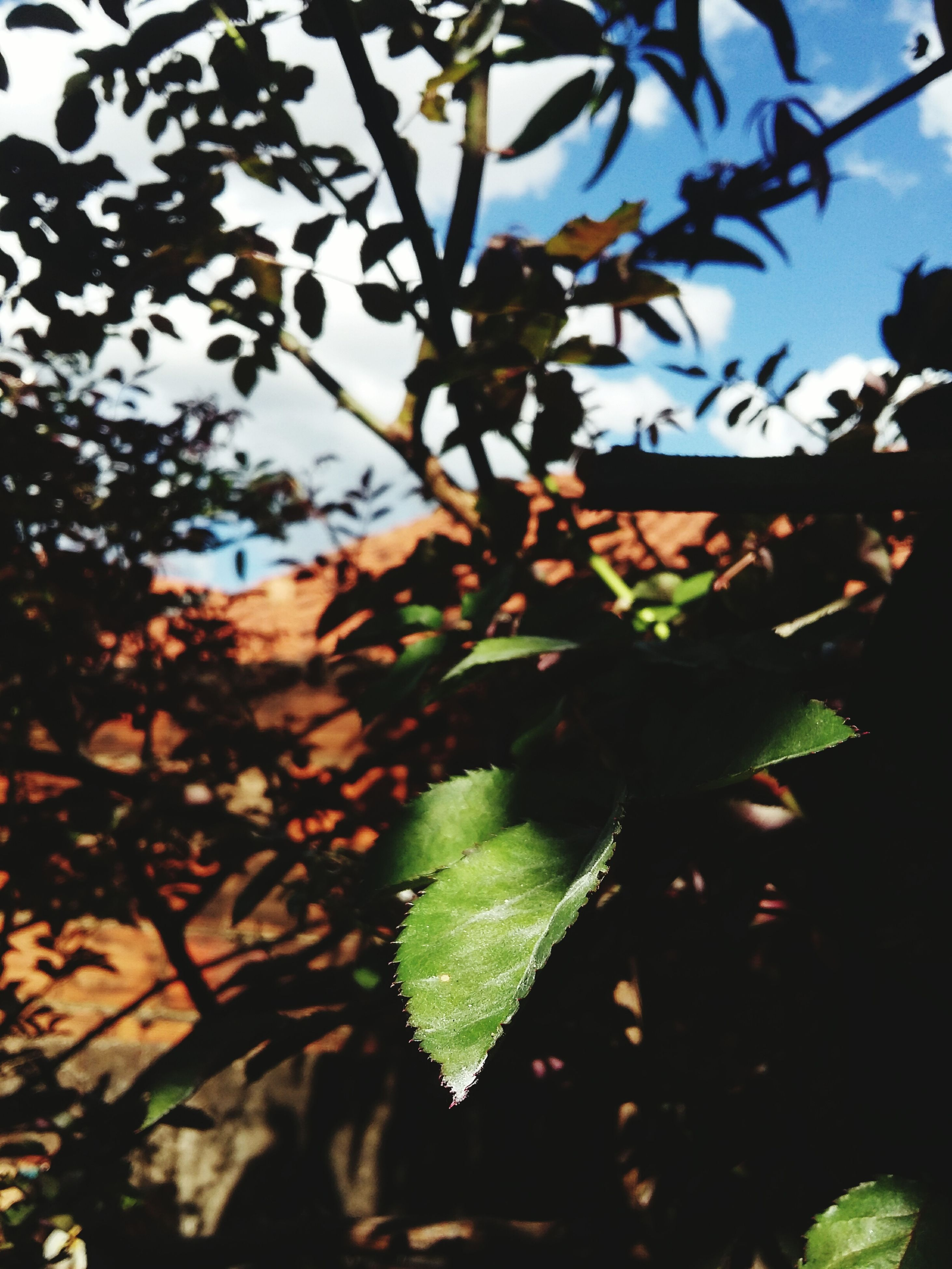 leaf, tree, nature, growth, beauty in nature, outdoors, day, branch, no people, close-up, freshness