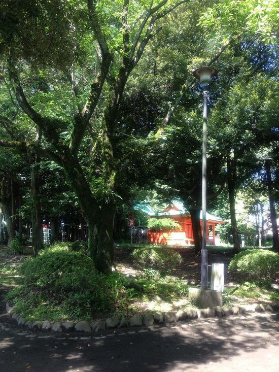 Shrine Japan Scenery EyeEm Nature Lover