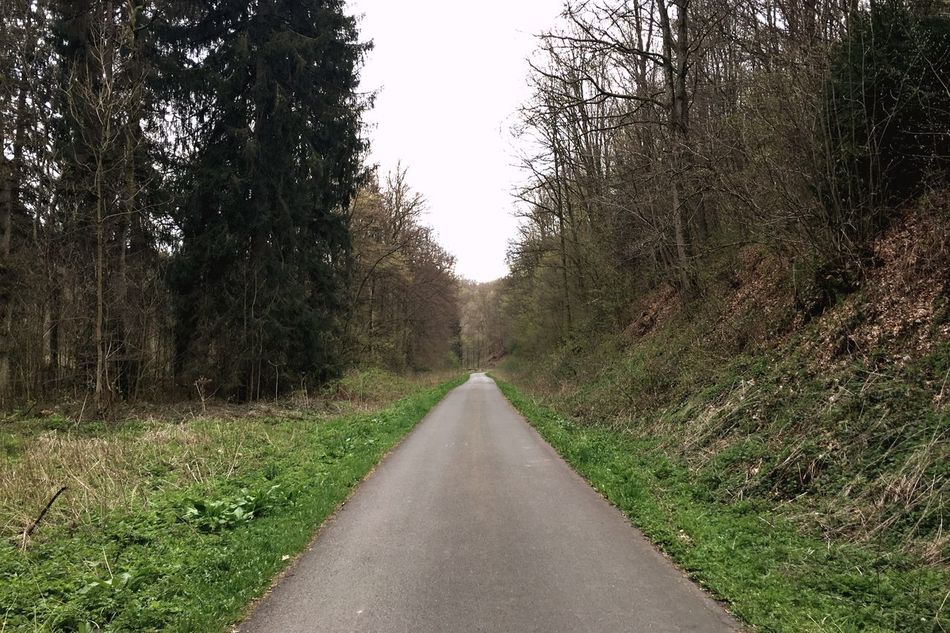 Road strait ahead. The Way Forward Diminishing Perspective Tree Nature Road Day Growth Outdoors Scenics Beauty In Nature No People Tranquil Scene Tranquility Landscape Grass Sky Leading Lines Finding New Frontiers