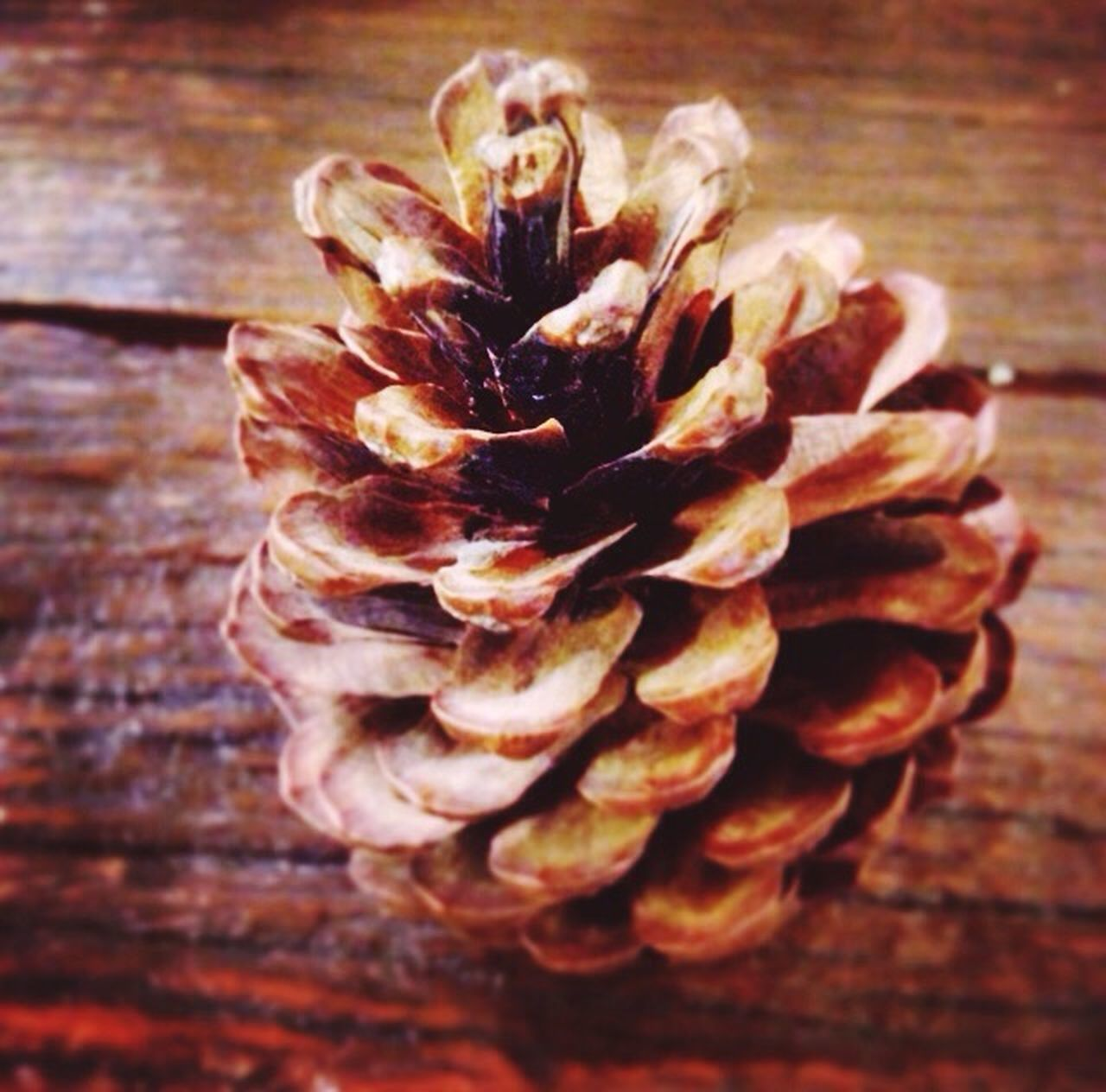 wood - material, close-up, indoors, flower, no people, freshness, day, flower head