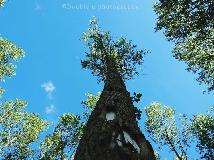 Tree Tree Trunk Nature Blue Forest Landscape Growth Day No People Sky Scenics Beauty In Nature Outdoors Close-up Photography Planet Earth Nature Photography Nature Leaf Structure Photography Naturephotography Fragility Beauty In Nature Details Low Perspective