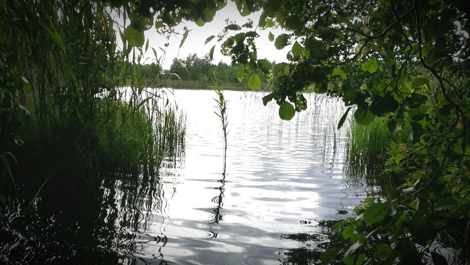 Water Krajobrazy Natura Poland Jezioro Trawa Nature Natural Beauty Woda No People Polska
