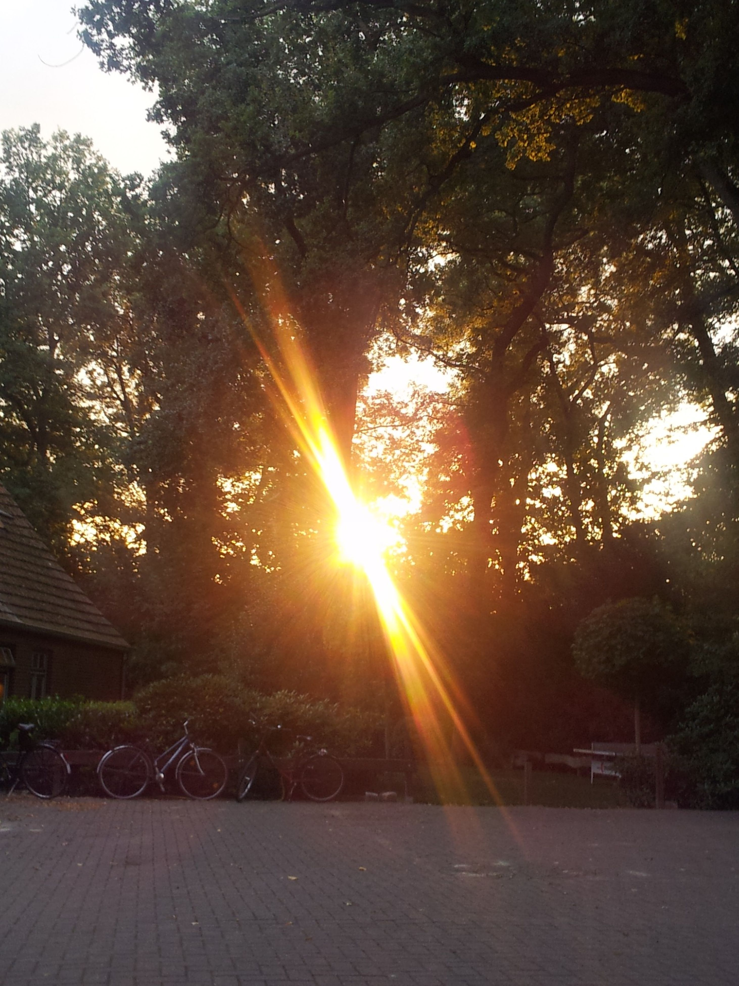 tree, sunlight, sun, sunbeam, the way forward, nature, sunset, growth, tranquility, lens flare, footpath, branch, park - man made space, orange color, built structure, beauty in nature, outdoors, no people, tranquil scene, railing