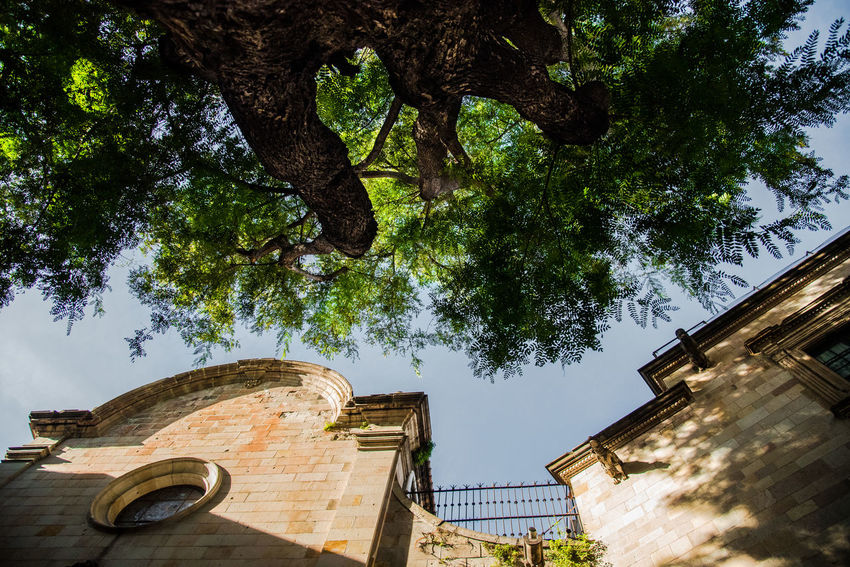 Barcelona Barcelona, Spain Façade Green Color Historical Building Historical Monuments Monuments Sant Filip Neri Square Wall Architecture Branch Building Exterior Built Structure Growth Historical History Low Angle View Monument Nature Outdoors Sky The Perfume Tree Walls