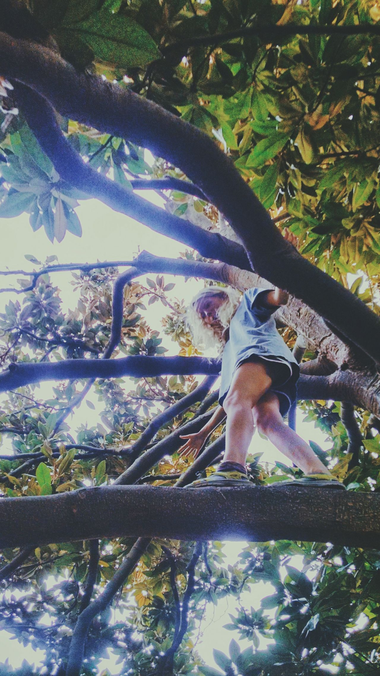 Day Green Color Branch Tree Trunk Outdoors Climbing Trees Girl Blonde In A Tree Monkey Climbing Magnolia Tree Southern Nature Explore ExploreEverything Explore Nature
