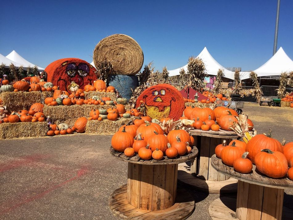 We visited this Pumpkin Patch with games and activities with my niece when we visited. Abundance Arrangement Autumn Day Halloween Heap Large Group Of Objects Outdoors Pumpkin Retail  Rio Rancho, New Mexico Ripe Stack Variation Vegetable