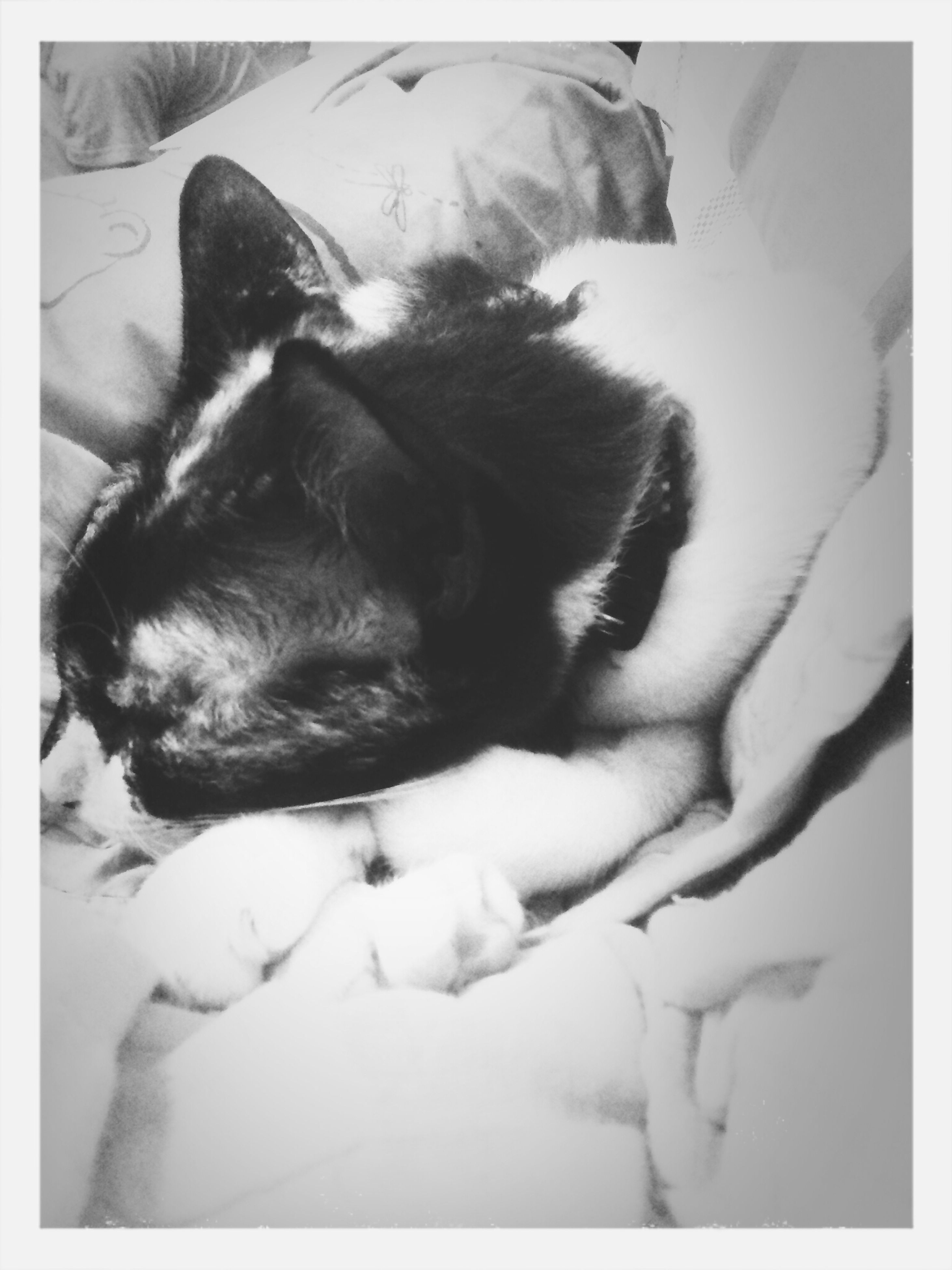 transfer print, animal themes, pets, domestic animals, one animal, mammal, auto post production filter, indoors, sleeping, relaxation, resting, domestic cat, lying down, bed, dog, cat, high angle view, two animals, full length, home interior