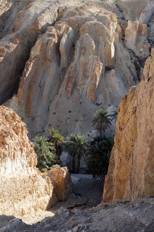 Mountain oasis Chebika at border of Sahara, Tunisia Africa Atlas Canyon Chebika Cliff Desert Erosion Exotic Geology Heat Hot Mountain Oasis Rock Sahara Stone Tree Tunisia Valley Wilderness