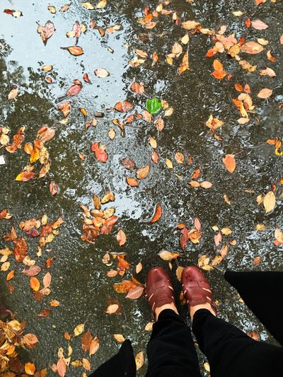 One green leaf, standing in puddles on an autumn day. Trees reflected in the puddles scattered with autumn foliage Low Section Person Leaf Standing Autumn Personal Perspective Change Shoe Season  Messthetics Leaves Day Fallen Human Foot Natural Condition Nature Outdoors Fragility Raindrops Rainy Days Autumn Collection Autumn Colors Burgundy Tranquil Scene Wet