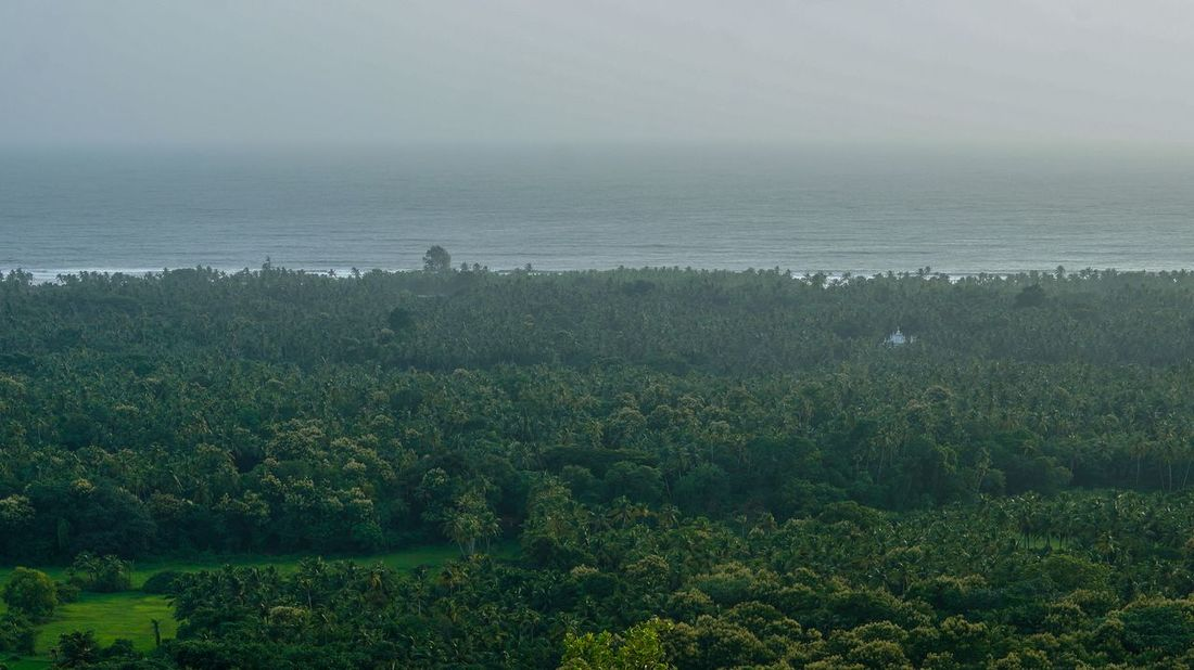 Outdoors Rural Scene Landscape Agriculture No People Beach Scenics Horizon Over Water Fog Sky Nature Forest Tree Area Aerial View Tree Sea Nature Eyem Collection Breathing SpaceGlobal Photographer-Collection Beauty In Nature EyeEm Best Shots Eyeem Market