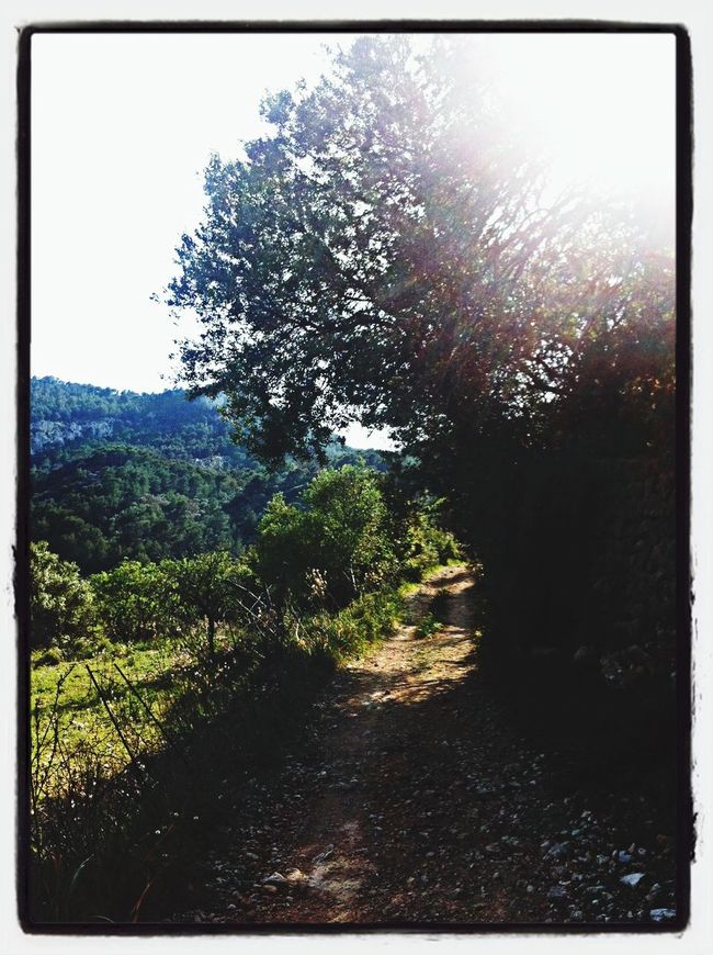 Walking Around Caminos Serra De Tramuntana