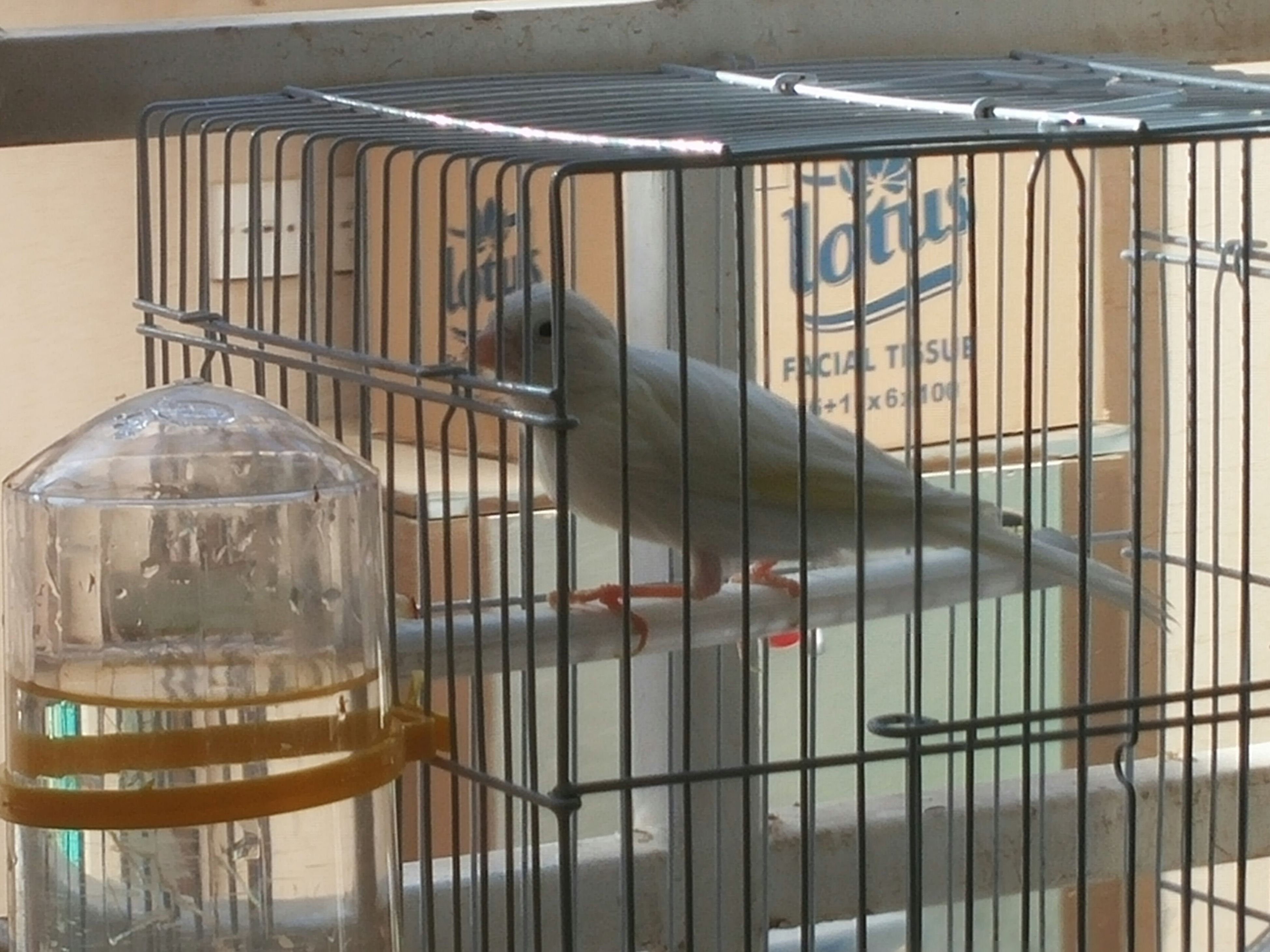 fence, animal themes, metal, built structure, railing, building exterior, architecture, day, glass - material, sunlight, no people, outdoors, one animal, protection, cage, window, pets, chair, high angle view, domestic animals