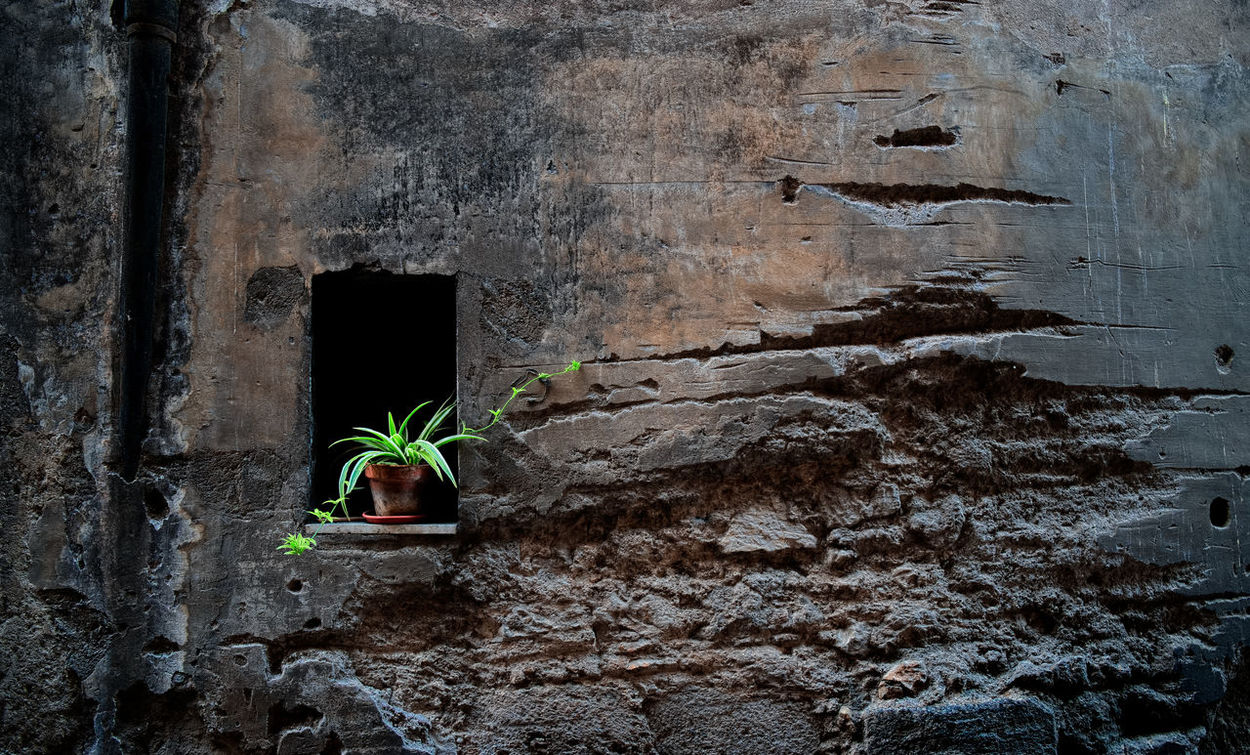 art by nature Alley Art Is Everywhere Brown Built Structure Decay Flowerpot Green Green Color Growth Italy Latium Leaf Nature No People Outdoors Plant Potted Potted Plant Shades Structure Vetralla Viterbo Wall Weathered Window