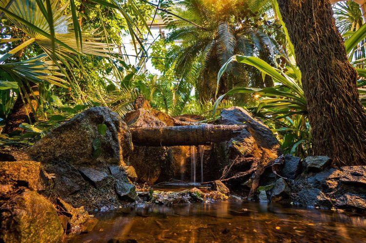 Oasis Palm House Denmark København Copenhagen Waterfall Greenhouse Flowerporn Nature Jungle
