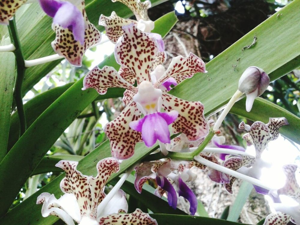 Flower Of The Day  Orchid Flower Contrast And Lights Beatiful Details Big Leaves Beauty In Nature Flowers,Plants & Garden