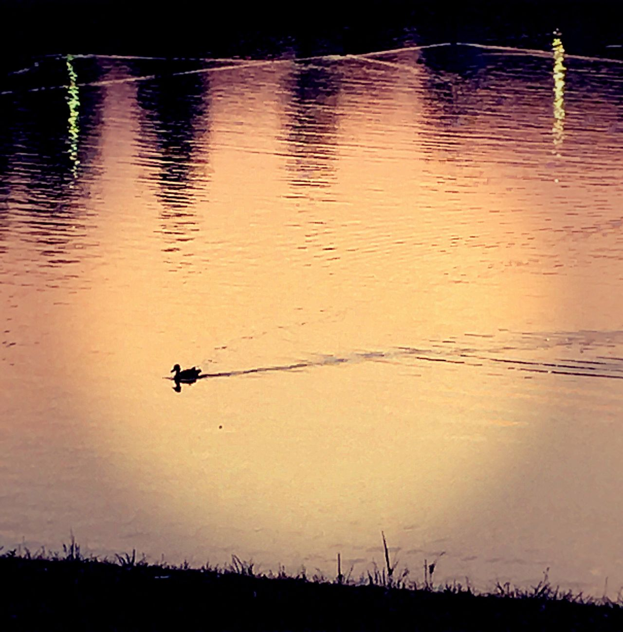Tranquil Lake Sunset Nature Animals In The Wild Bird Water Beauty In Nature Reflection Tranquility Lake Scenics EyeEm Selects