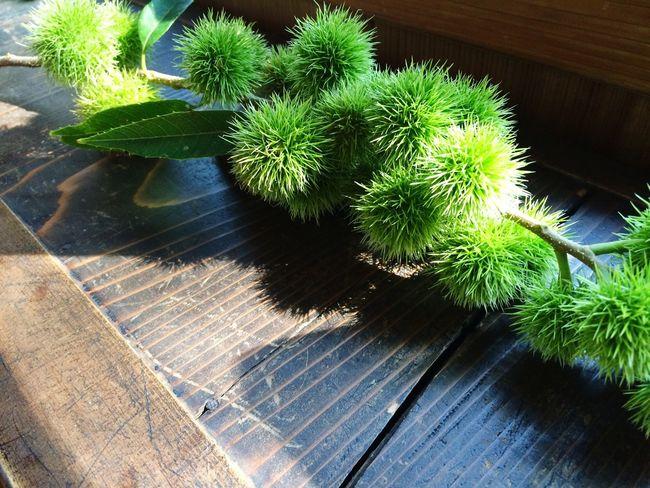 今日も良い天気でした☀️ 栗 和 Chestnut Green Japanese  Japan Sun Light And Shadow