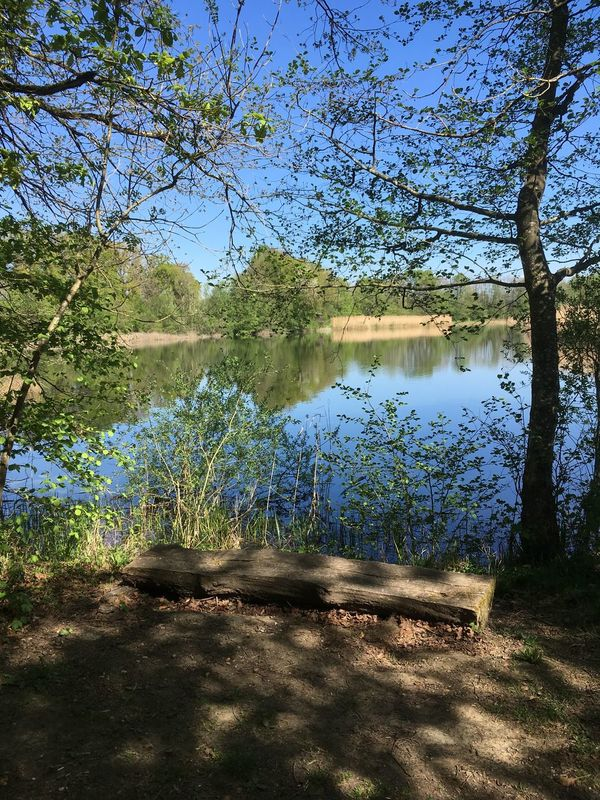 Beauty In Nature Branch Day ETANG DE CROSAGNY Grass Lake Nature No People Outdoors Sky Tranquil Scene Tranquility Tree Water