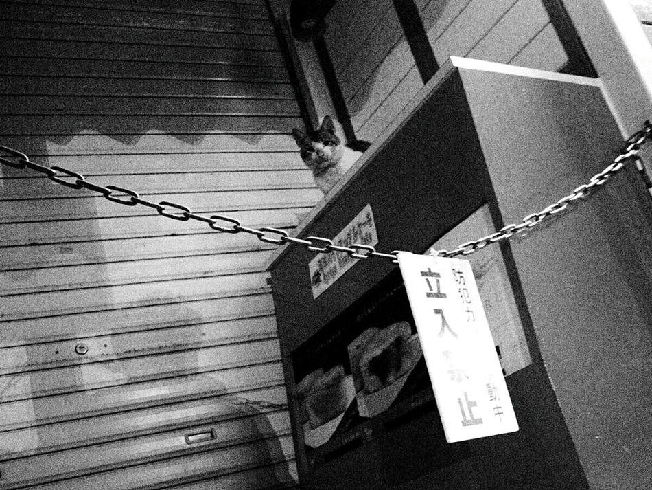 Cat 猫 Streetphotography Cats Of EyeEm Keep Out 立入禁止 立ち入り禁止 Stray Cat 野良猫