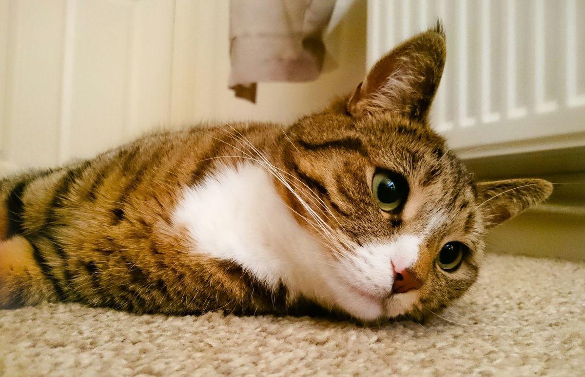 Moo Moo the cat / Cat Cats Cat Lovers Animals Pets Pussycat Cute Pets Cute Cats
