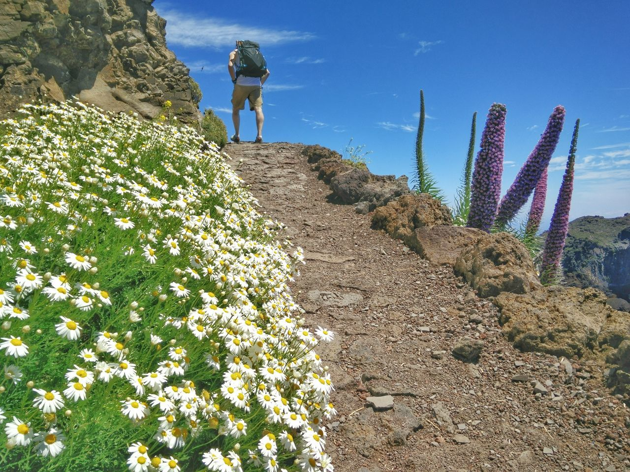 Cactus Nature Plant Day Outdoors Sky Beauty In Nature Hiking La Palma, Canarias