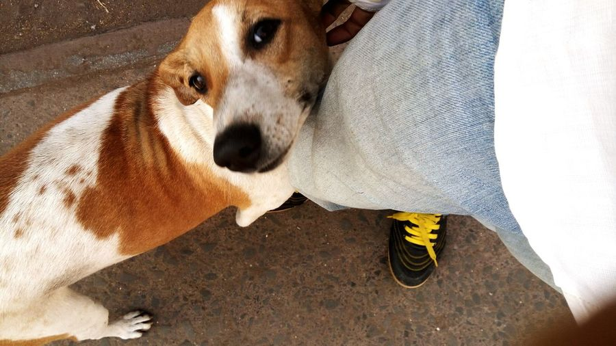 """""""I won't let you go without giving me a Treat. """"..Dog Stray Dog Dog Love Loyalty Pampered Pets Daily Life Dailylifeindia Dailydoseofstreet Cute Pure Love ❤ Pure Emotions."""