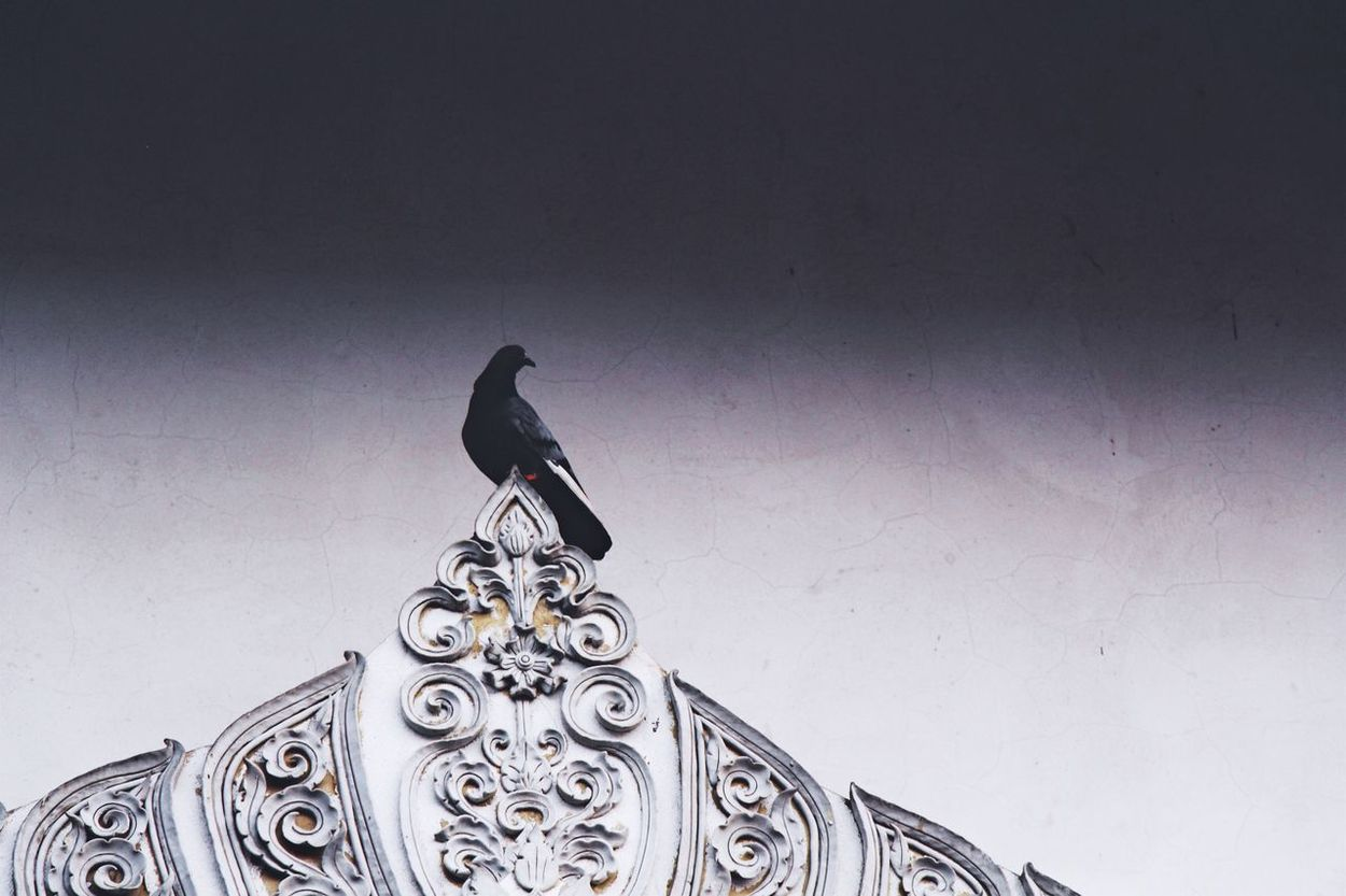 Thailand Thai Thailand_allshots Northern Thailand Chiangmai Chiang Mai   Thailand Simplicity Composition Desaturated Bird Animal Themes Perching One Pigeon One Bird Ornate Detail Intricate Decoration Decorative Temple Buddhism Temples Buddhist Temple Architecture