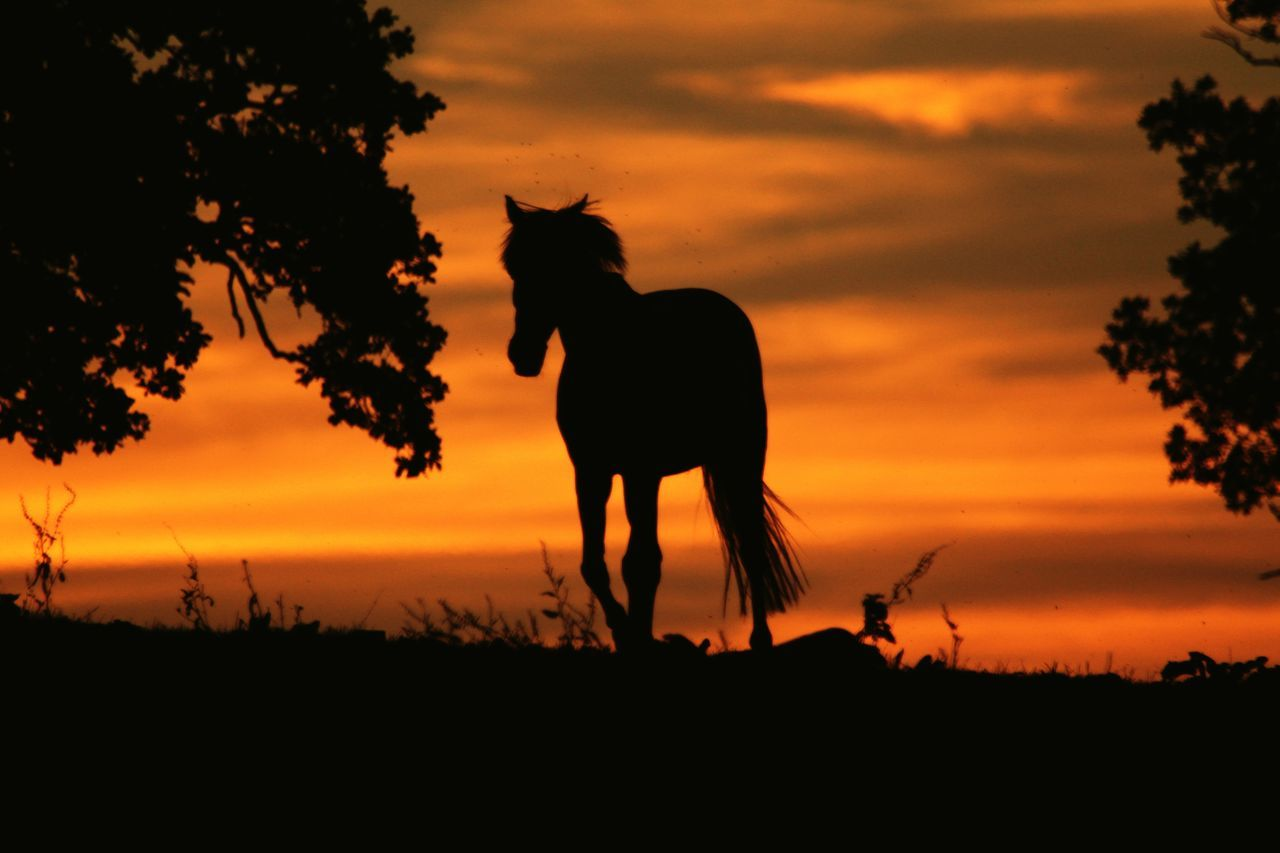 Horses on the hill Sunset Screensaver Tranquility Beauty In Nature Sunset_collection Sunset Silhouettes Horses Horse Silhouette