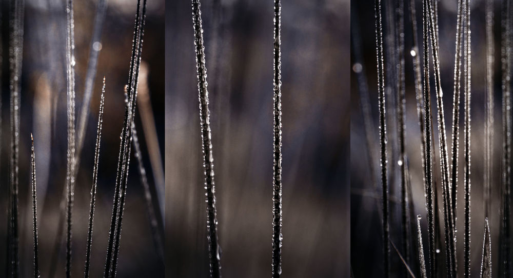 Backgrounds Brown Frost Grass Grassland Lihgts Three Triptych