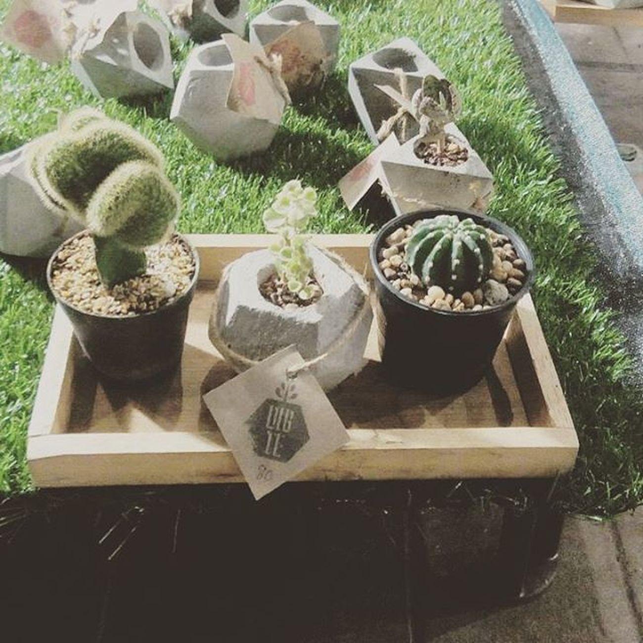 กระถางชุดเล็ก 80บาท กระบองเพชร กระถาง กระถางปลูกต้นไม้ กระถางกระบองเพชร Loft Rustic DIY Design Dib_te Gardening Gardener Garden Gardenia Cactusthailand Cactuslove Cactusmagazine Cacti Cactusclub Cactusclubcafe Secculent Sacculent