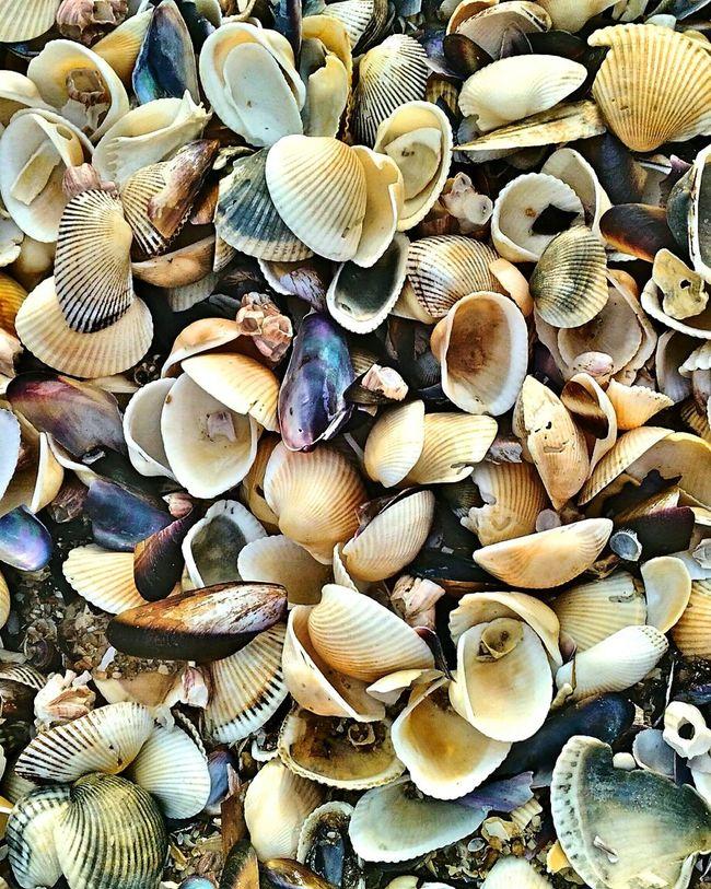Seashell on the seashore - Penang, Malaysia Penang Abundance Full Frame Large Group Of Objects Arrangement Beach Seashell Nature Close-up Cockles HDR Travel