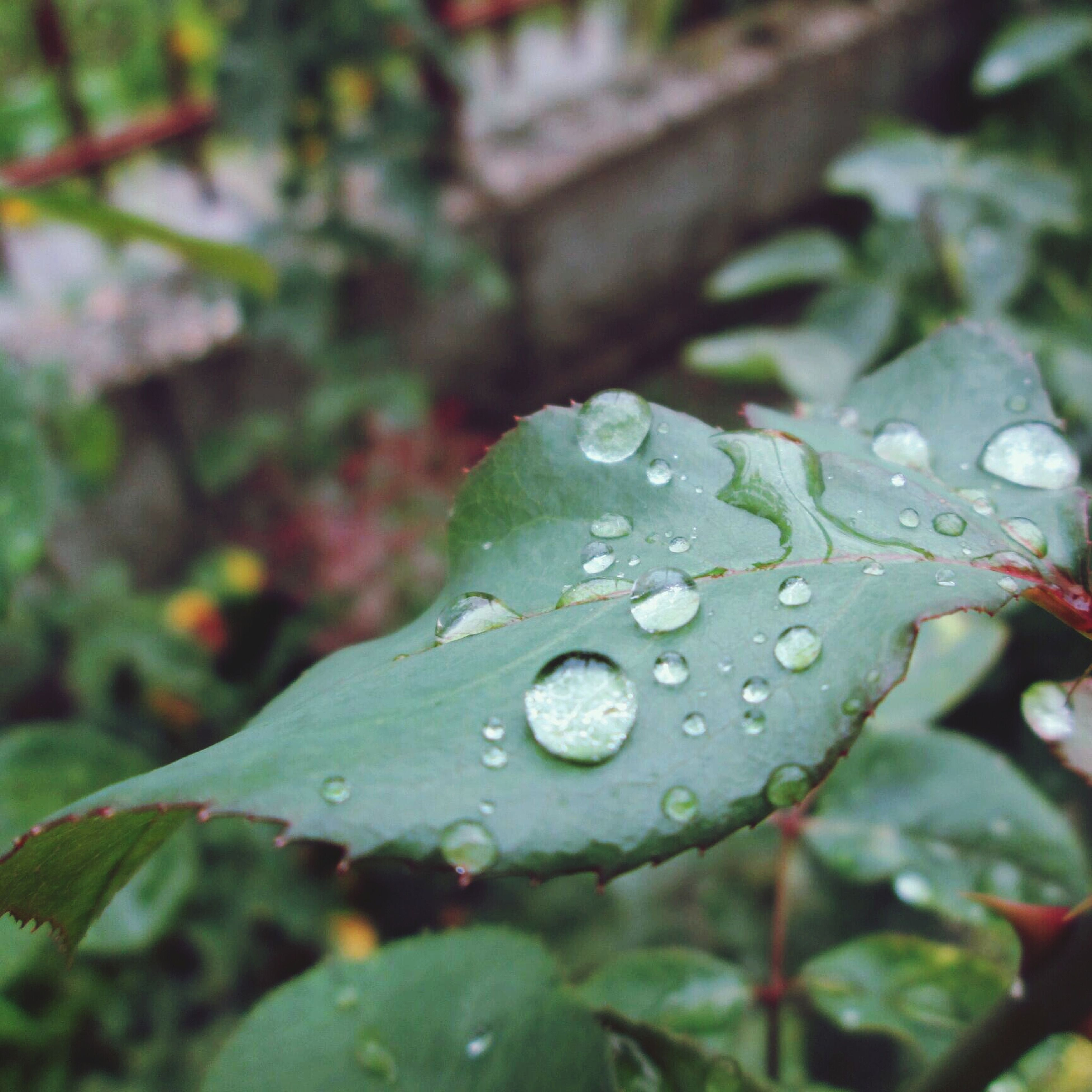 drop, leaf, water, wet, growth, close-up, freshness, dew, plant, green color, nature, raindrop, beauty in nature, fragility, focus on foreground, rain, leaf vein, season, weather, selective focus