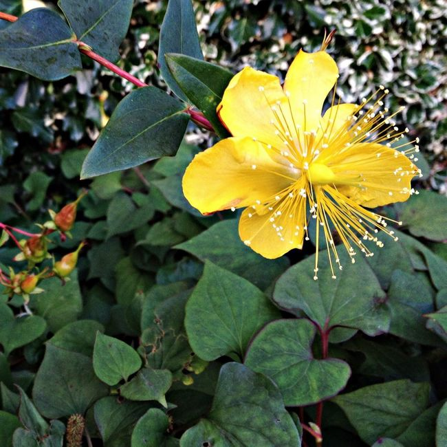 Yellow Flower Taking Photos Eyeem Philippines