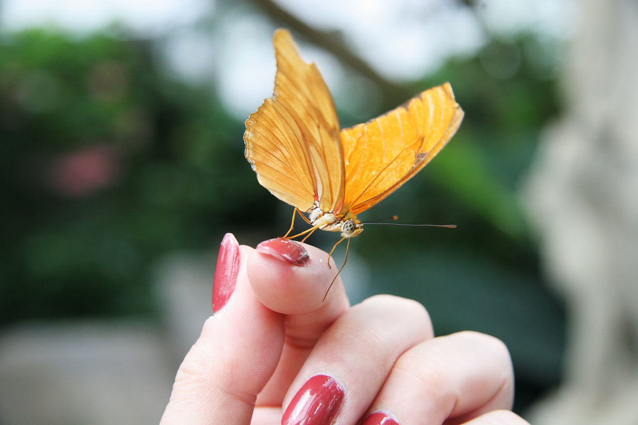 human hand, human body part, one animal, one person, insect, real people, human finger, animals in the wild, animal themes, focus on foreground, holding, close-up, animal wildlife, day, outdoors, fingernail, nature, spread wings, freshness, people
