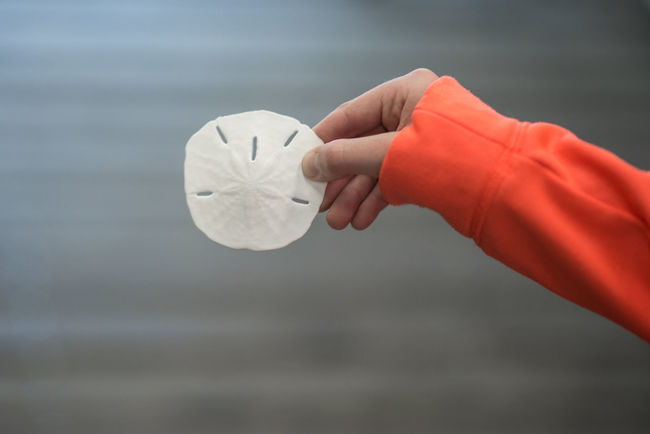 Sanddollar Shell Depth Of Field Hand Sand Dollar Shells Depthoffield Hello World Check This Out Taking Photos