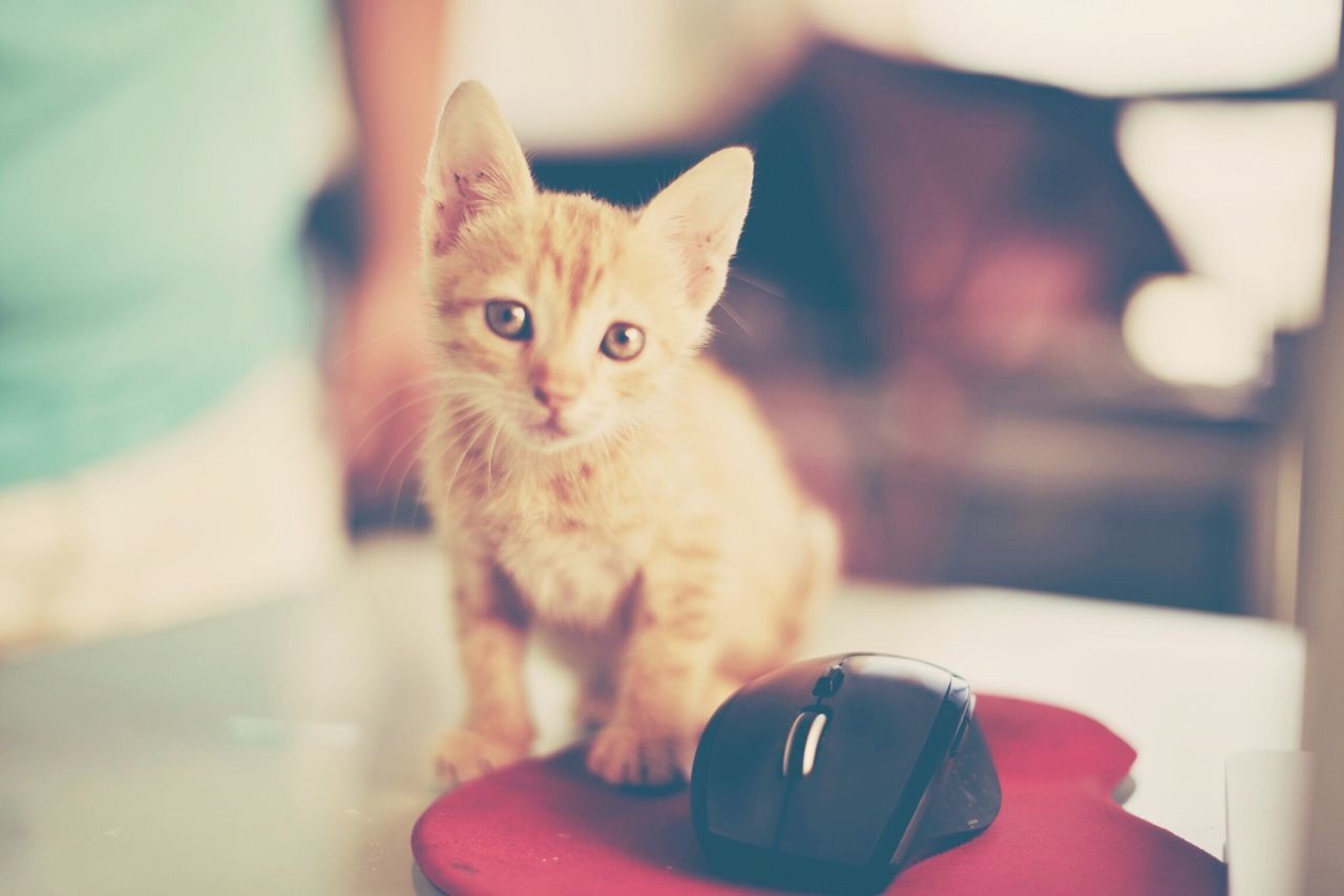Pastel Power Cat Bisgen Eye4photography  Hello World EyeEm Best Edits Kedi Relaxing EyeEm Masterclass Animals