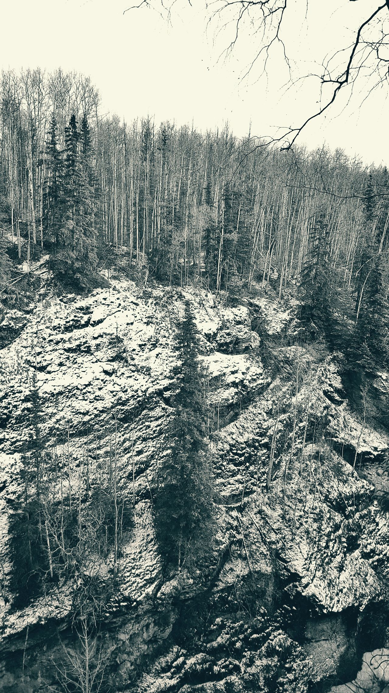 Thunderbird Falls, AK Black & White Black And White Alaska Trees Forest Photography Cliff Canyons Canyon Snowy Forest Snow Forest