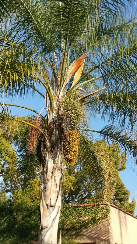Palm Tree Sky And Palm Tree EyeEm Nature Lover Simple Beauty Beautiful Nature Walking Around Communing With Nature Simple Nature_collection The Purist (no Edit, No Filter)