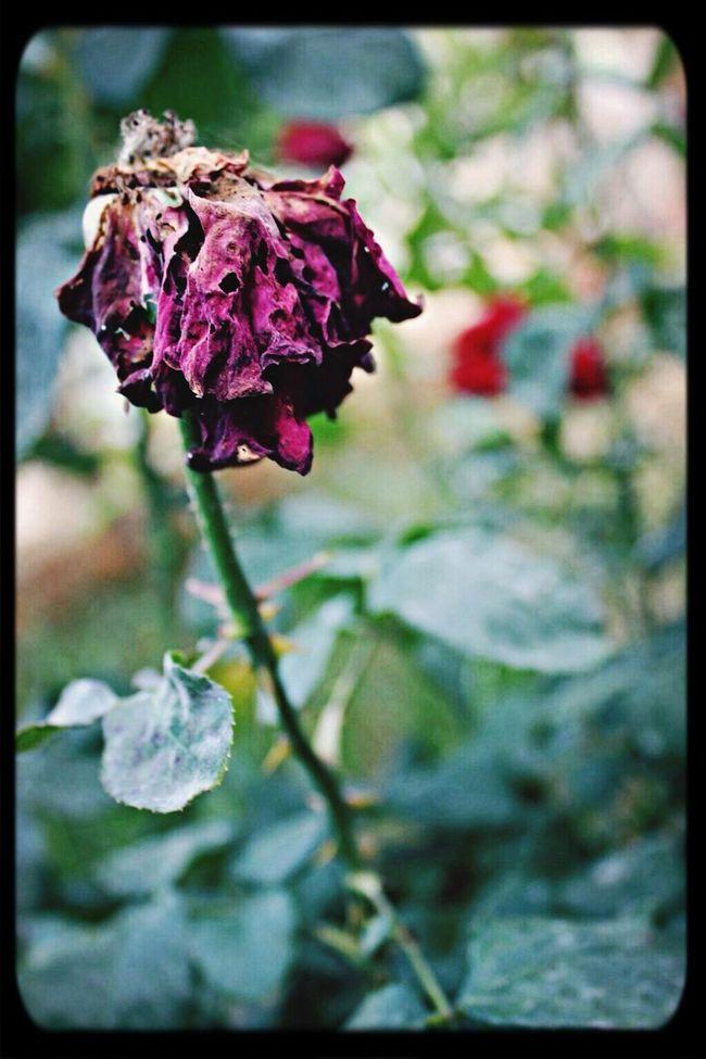 Flower EyeEm Flower Beautiful ♥ Great #myphoto