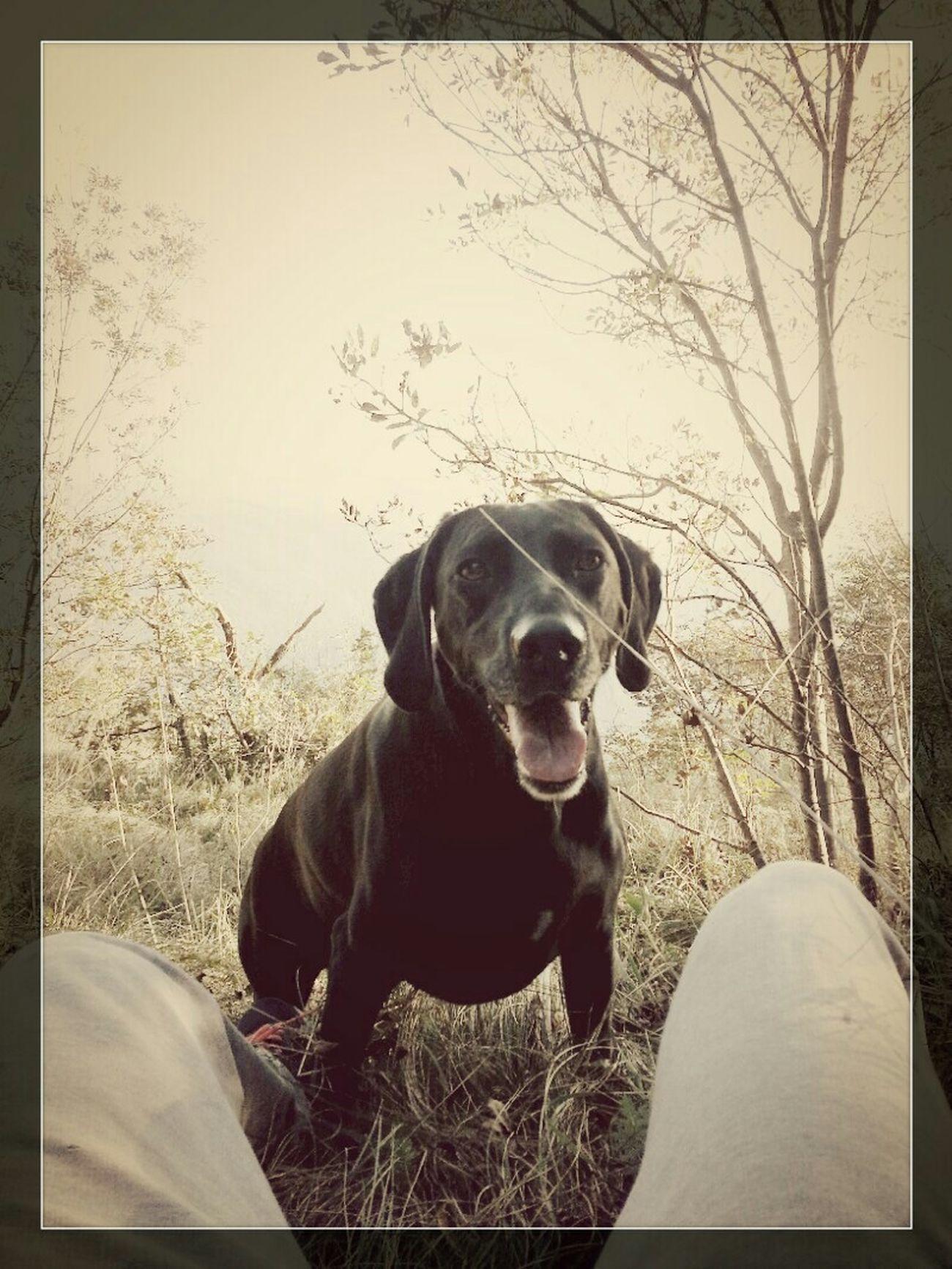 My Dog <3 Enjoying Life Mountain Livelife