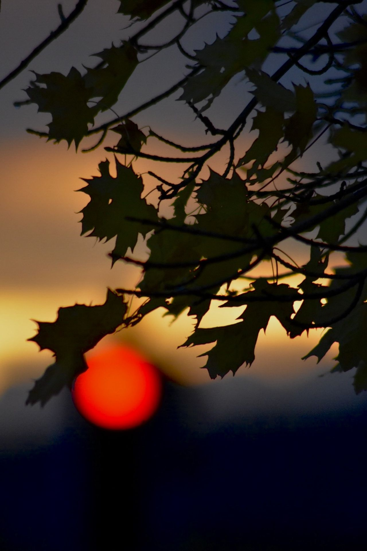 Beauty In Nature Branch Close-up Day Dof Dusk Growth Leaf Nature Nikon Nikonphotography No People Orange Color Outdoors Silhouette Sky Sun Sunset Tree