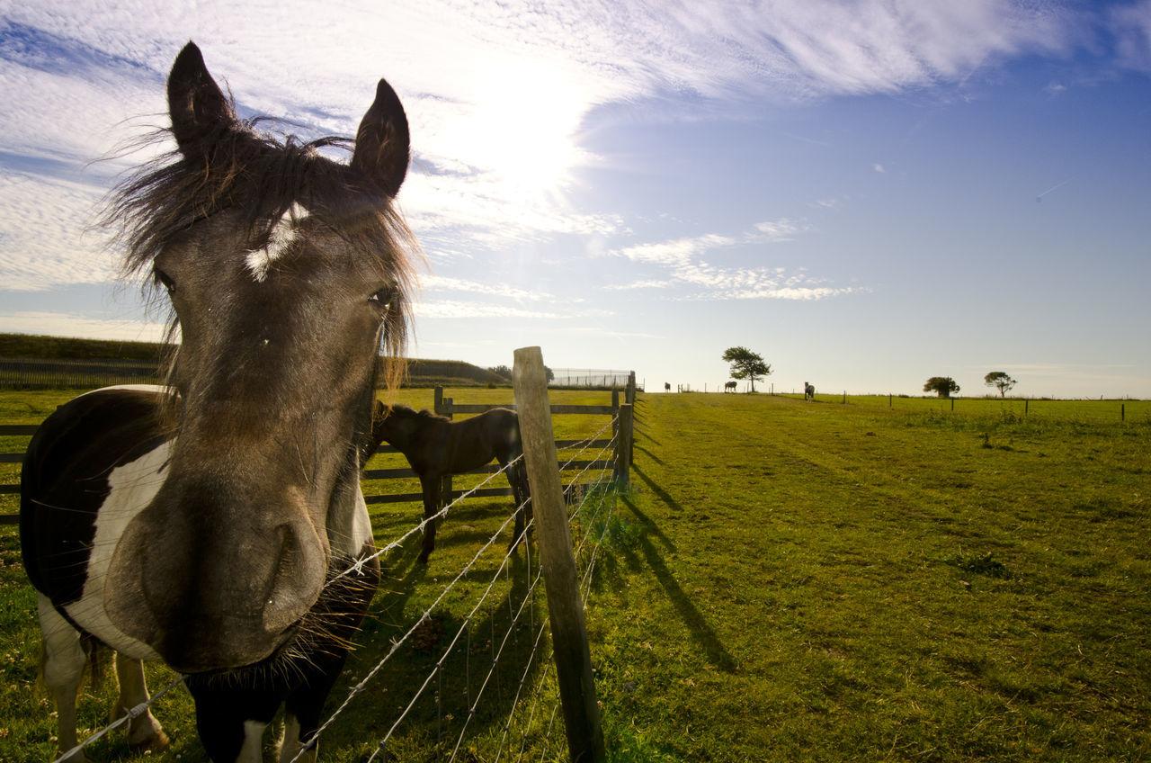 Beautiful stock photos of farm, Animal Themes, Day, Domestic Animals, Farm