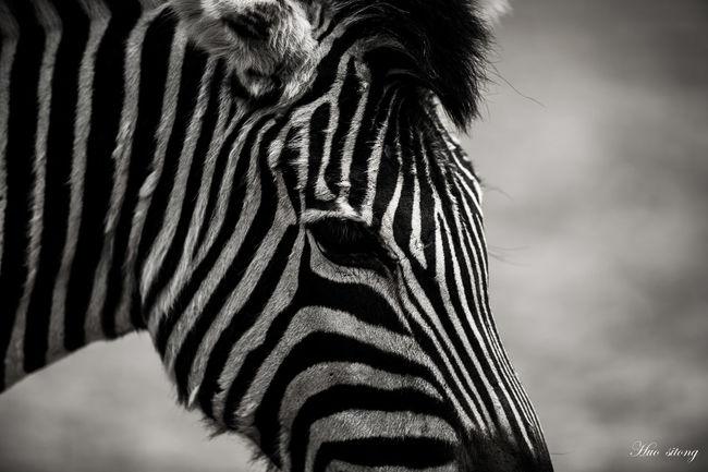 喜欢黑白条纹