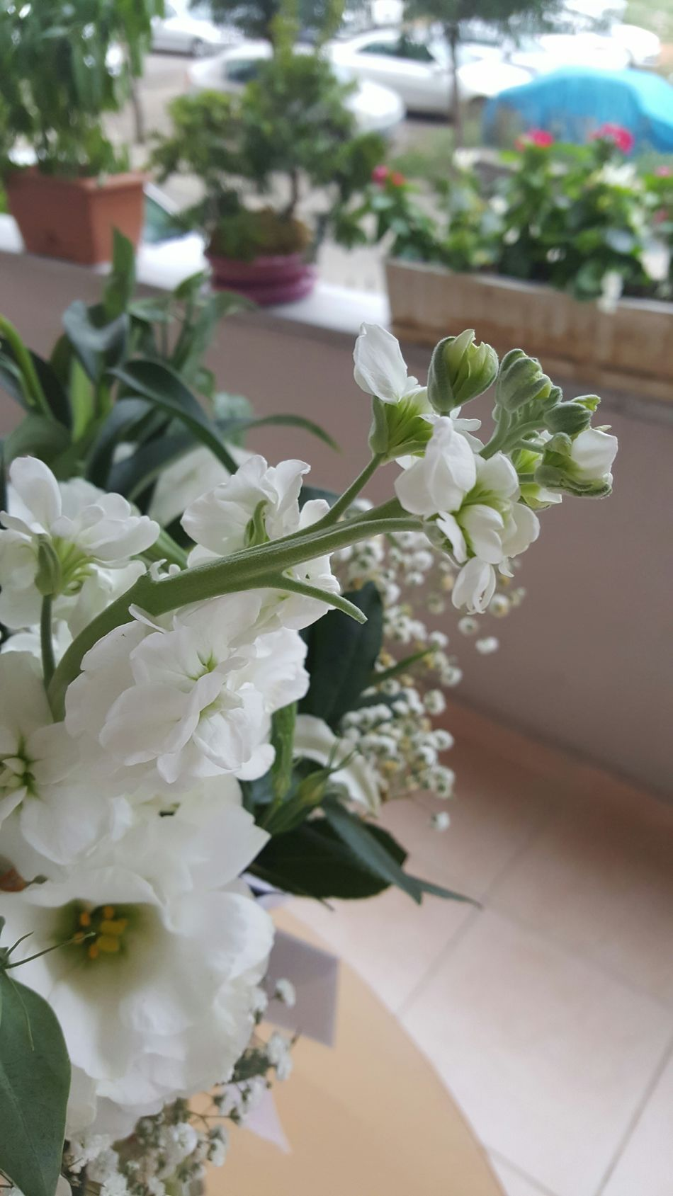 White Flowers From My Lens Lovely Atmosphere Taking Photos Balcony Flower Collection RePicture Growth